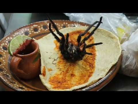 أحدث إصدارات المطبخ المكسيكي تاكوس العناكب