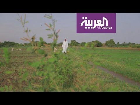 شاهد سفينة المساعدات السعودية  الإماراتية إلى السودان شكَّلت انفراجة على الموسم الزراعي