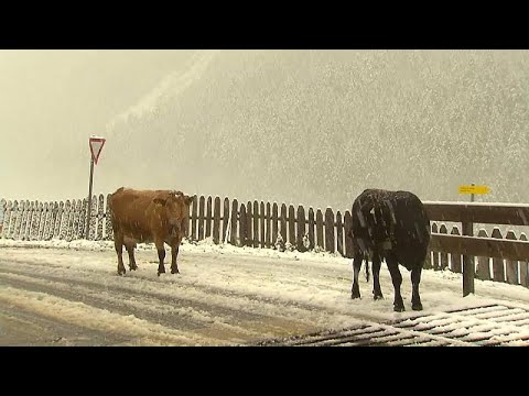 شاهد أول تساقط للثلوج على ارتفاع 2000 متر في مرتفعات الألب