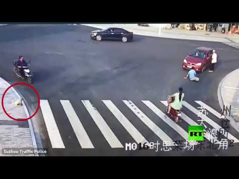 شاهد كيف يعطي كلب درسًا في قواعد المرور