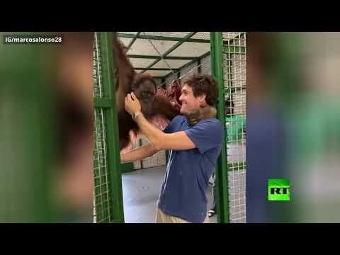 شاهد قرد يقبل ظهير تشيلسي ماركوس ألونسو في مشهد طريف