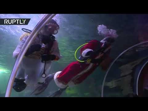 شاهد سانتا كلوز وملاك الكريسماس يغوصان نحو أسماك قرش لإطعامها