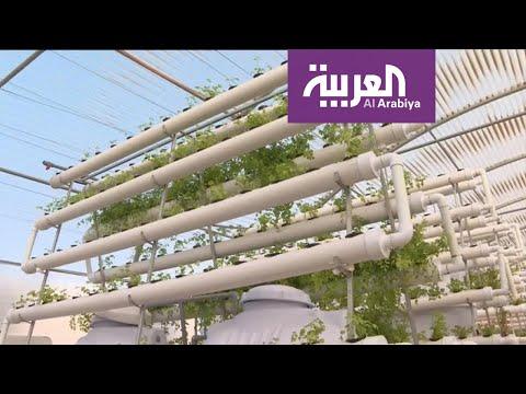 شاهد سعودي يكتفي ذاتيا بزراعة الخضروات في منزله