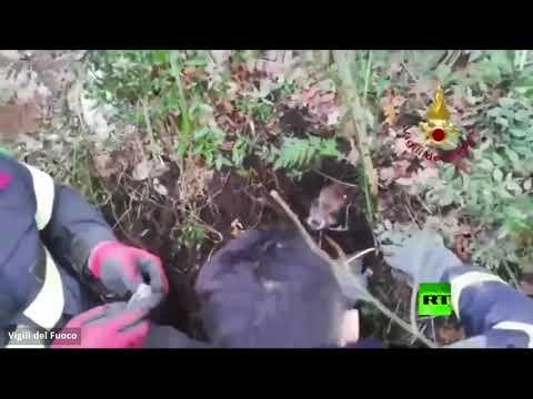 شاهد إنقاذ جروين دفنًا تحت التراب أحياء