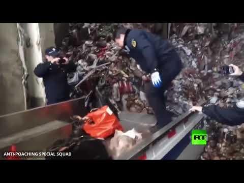 شاهد الصين تحظر تجارة الحيوانات البرية