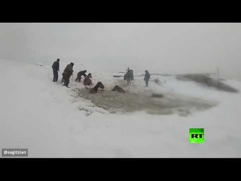 شاهد مواطنون روس ينقذون خيولًا سقطت تحت المياه المتجمدة