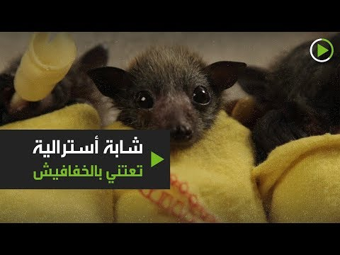 شاهد شابة أسترالية تعتني بالخفافيش وتثير الجدل
