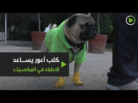 شاهد كلب أعور يساعد الأطباء في المكسيك