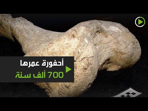 شاهد احفورة عمرها 700 ألف سنة لحيوان غامض في الأرجنتين