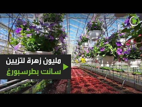 شاهد بستانيو سانت بطرسبورغ في روسيا يزرعون مليون زهرة