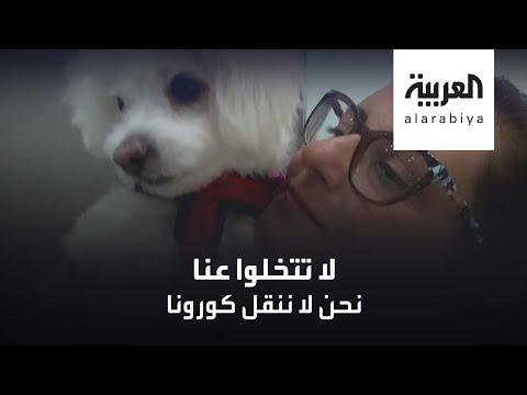 شاهد عيادة بيطرية في القاهرة تتبنى مبادرة إنسانية لحماية الحيوانات