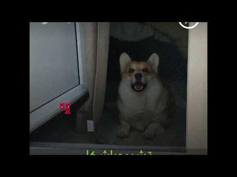 شاهد تصرف غريب لكلب عند سماعه حرفًا من الأبجدية