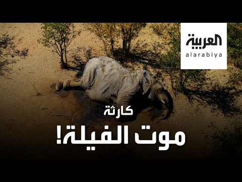 شاهد أسوأ كارثة تحيط بالفيلة في القرن الحالي