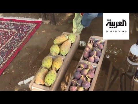 شاهد مزارع الطائف في السعودية تنتج أكثر من 500 مليون وردة سنويًا