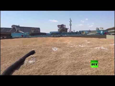 شاهد سفينة مصرية تُفرغ حمولتها من القمح الروسي في صواع ميناء الإسكندرية