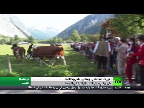 شاهد تغيرات اقتصادية ومناخية تُلقي بظلالها على مراعي جبال الألب في النمسا