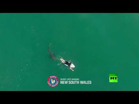 شاهد لقطات جوية تُظهر محاولة هجوم سمكة قرش على راكب أمواج
